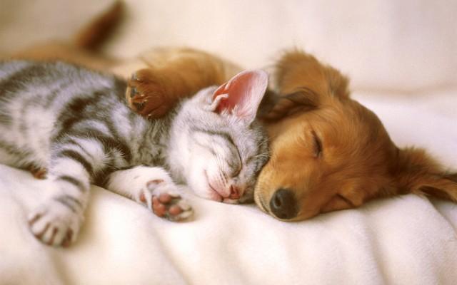 Первые признаки проблем со здоровьем у домашних животных